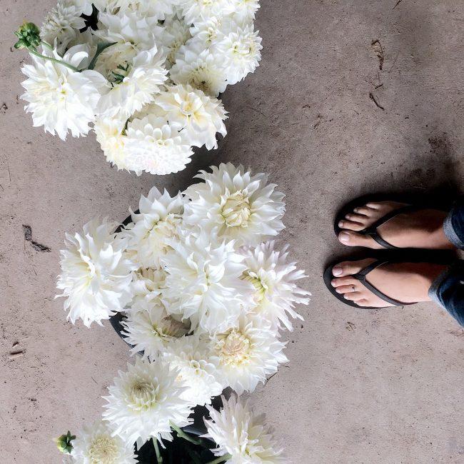 White Dahlias | The Day