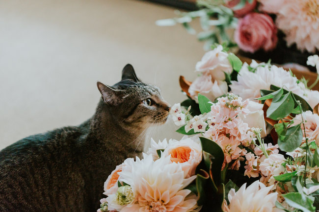 Wedding Cat | The Day